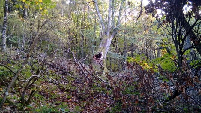 Ollo do bosque